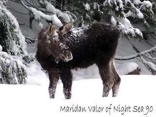 Last post of 2015; top favorite posts, things I want for 2016, baby moose picture taken with my brand new...gotta read the blog to find out what that was.