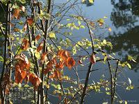 Fond d'écran novembre 2011 - Autour du lac du bois de Boulogne
