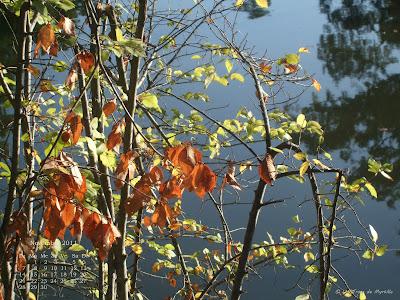 Lac du Bois de Boulogne en automne - Fond d'écran de novembre 2011, avec et sans calendrier