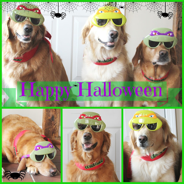 golden retriever dogs dressed up as teenage mutant ninja turtles for halloween