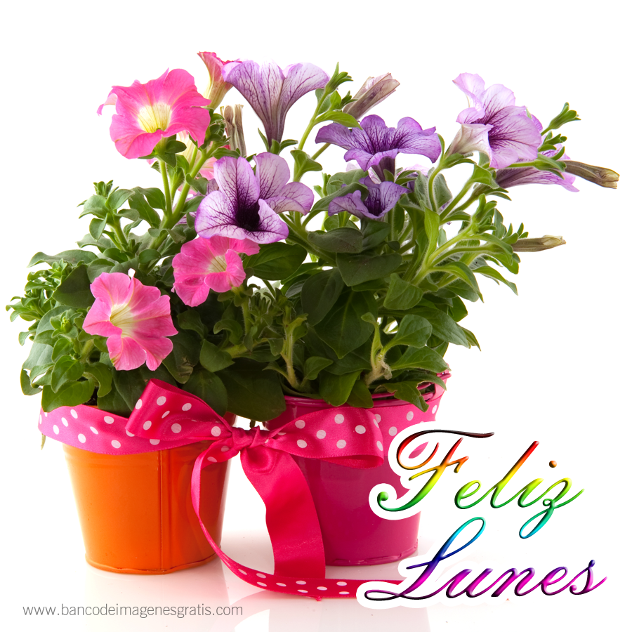 Banco de im genes feliz lunes tulipanes con mensajes for Plantas bonitas de interior