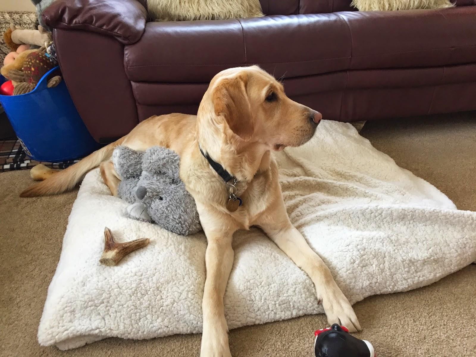 Zara Guidedog