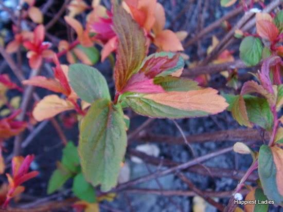 spring leaves 4