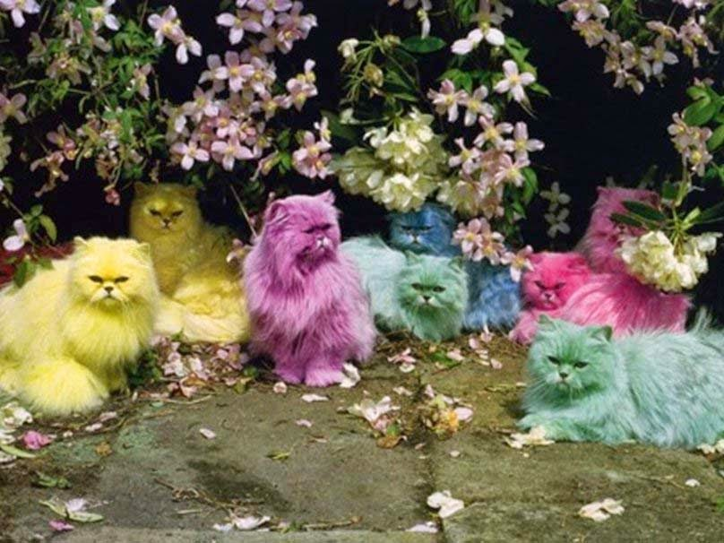 colorful-of-cute-cats-yellow-pink-red