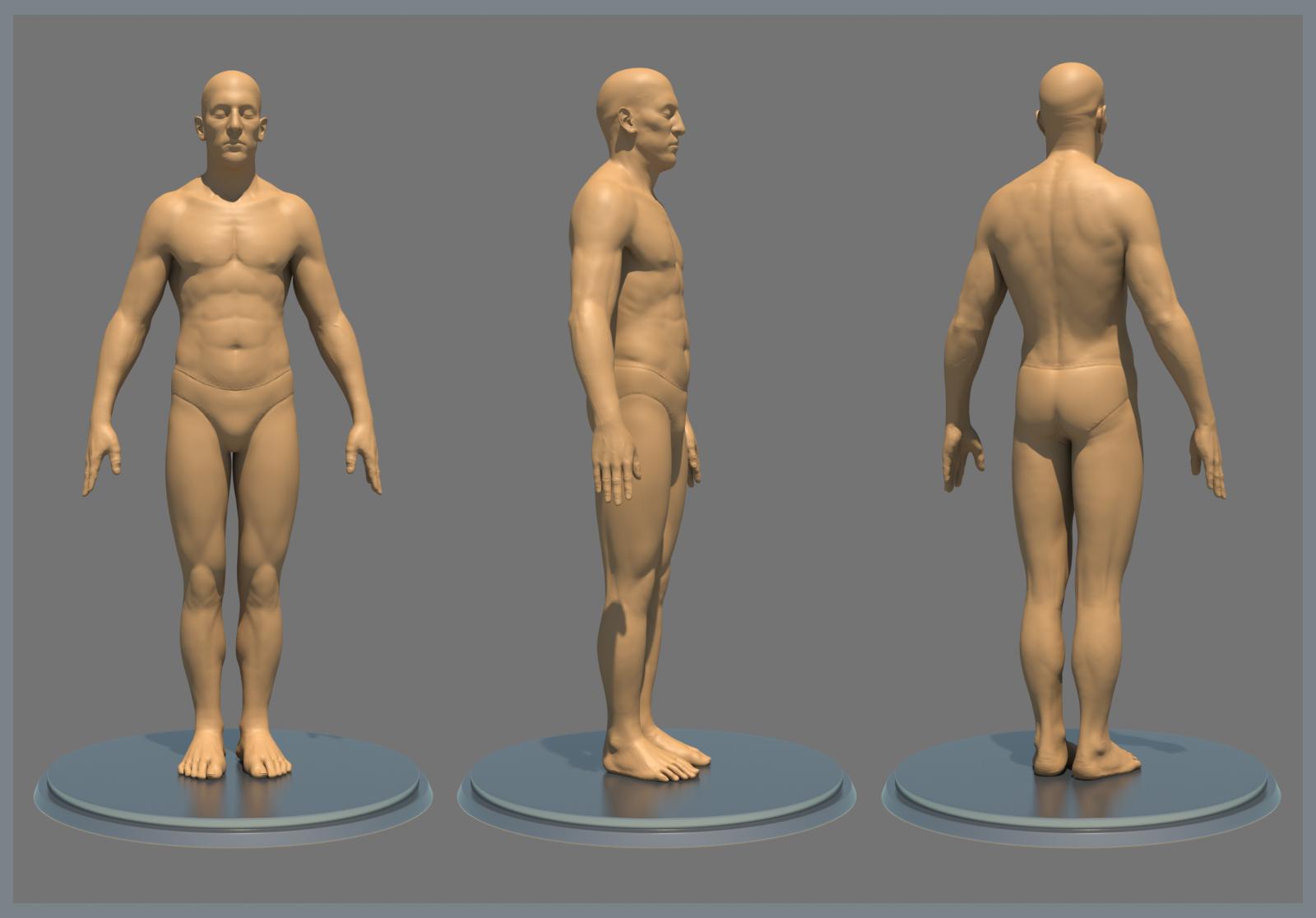The Anatomy Of Man Gallery - human body anatomy