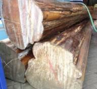 penyebab kayu jati mahal