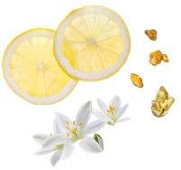 Aromas de Verão