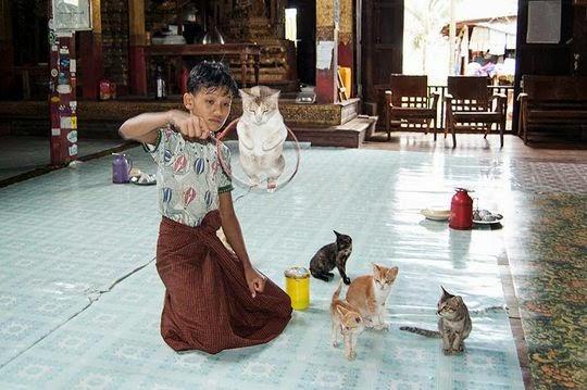 Myanmar jumping cat monastery