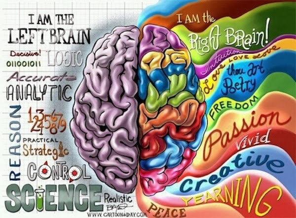 a look at the left and right side of the brain and its functions The idea that creative people use the right side of their brain more  does your left brain know what your right brain  of people picture how the brain functions.