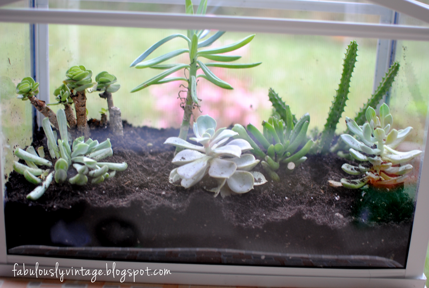 Fabulously vintage diy terrarium with succulents for Fish tank terrarium