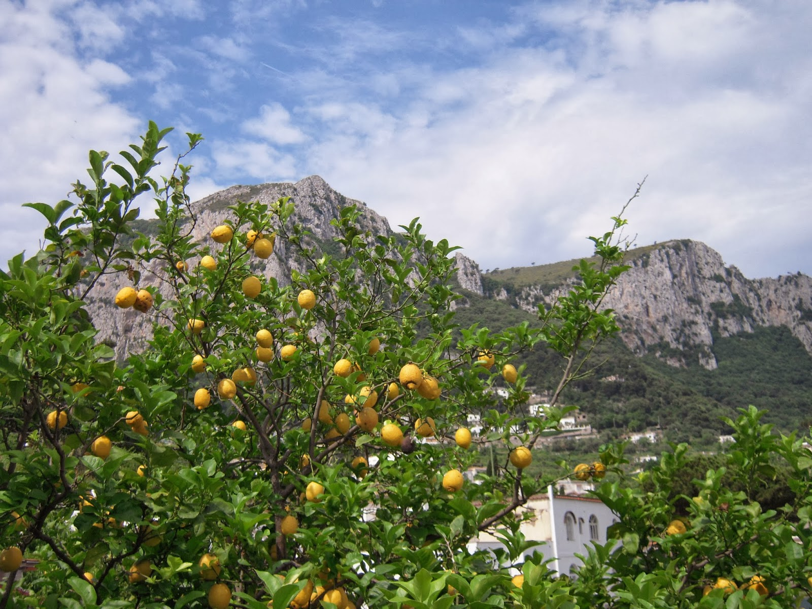 Capri lemon trees limoncello