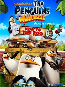 Xem Phim Biệt Đội Chim Cánh Cụt - Penguins of Madagascar