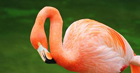 flamingo honolulu zoo hawaii