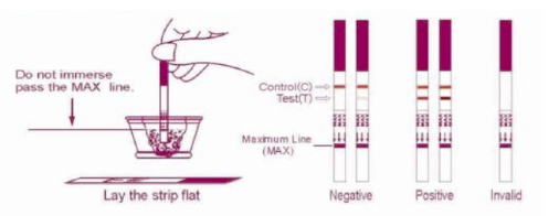 first response ovulation test strips instructions