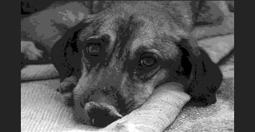 Φρικιαστικό - Εξαρθρώθηκε Σπείρα που Έστελνε Αδέσποτα στη Γερμανία για Κτηνοβασία και ως Πειραματόζωα