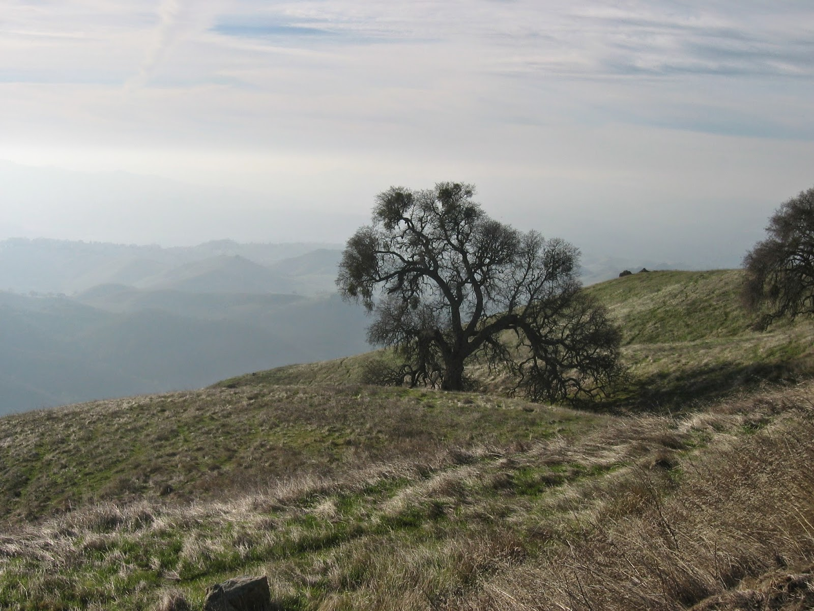 Mt. Diablo Regional Park, California by Rachel Medanic