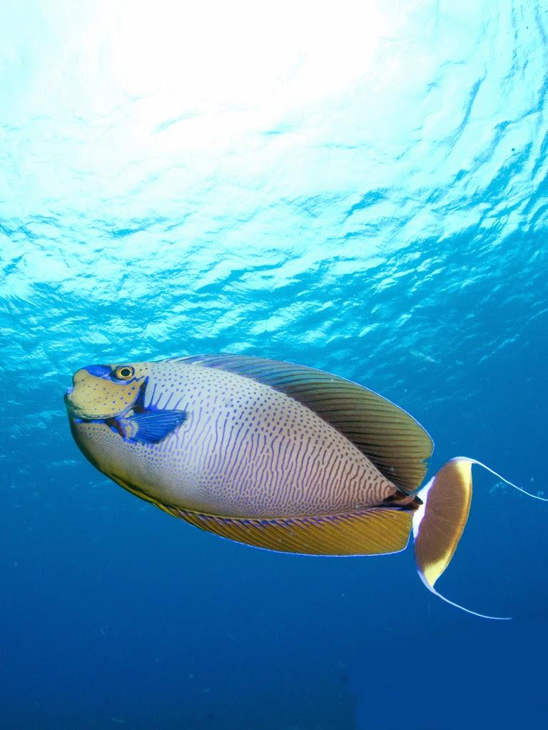 Wallpaper beauty of nature tahiti islands resort is a for Bora bora fish