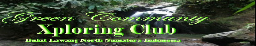 Green Community  Xploring Club  I  Bukit Lawang Xploring The Jungle _Orang Utan