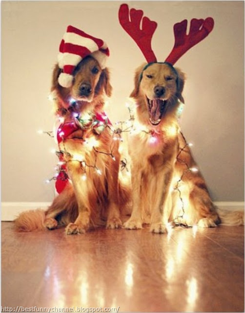 Two funny Christmas dogs.