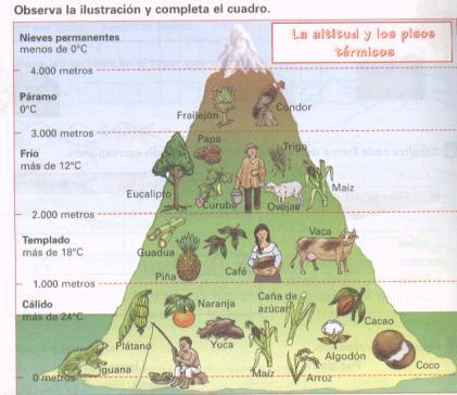 Bienvenidos al mundo de las ciencias sociales geograf a for Pisos de vegetacion canarias