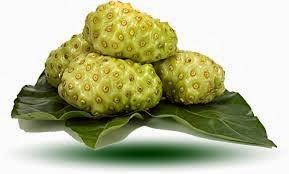 Ramuan Herbal untuk Penyakit Limpa Bengkak