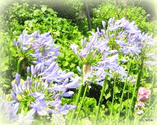 ღ Aprecio plantas e a natureza...
