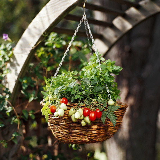 Grow vegetables in hanging baskets
