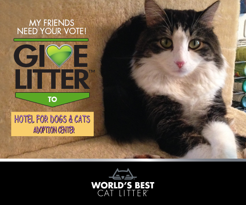 Anakin Two Legged Cat for World's Besst Litter Give Litter Charity