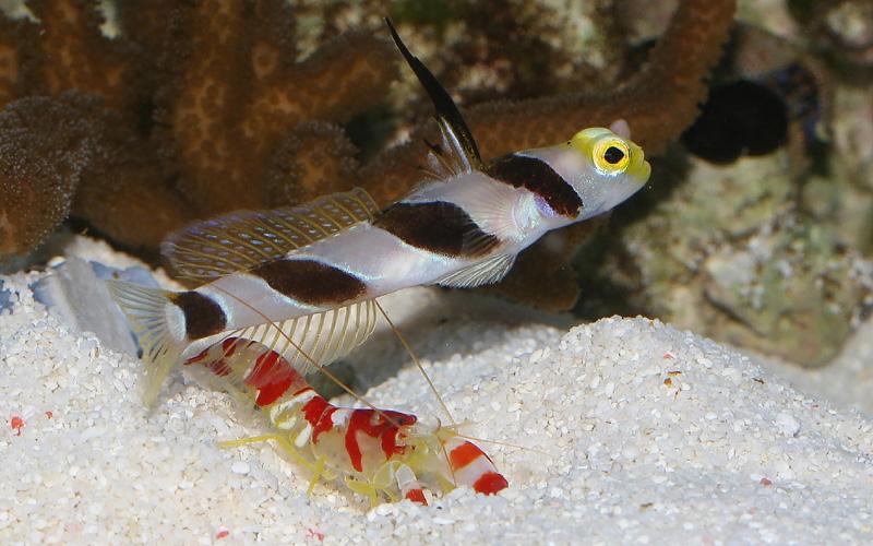 nematodes and fish relationship