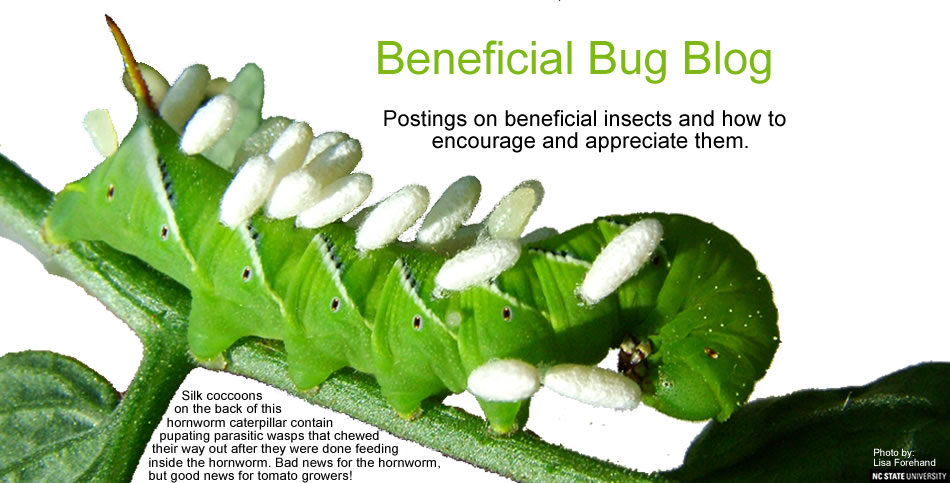 Beneficial Bug Blog