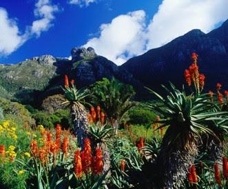 Sud%C3%A1frica-plantas-flores-jard%C3%ADn-bot%C3%A1nico-Kirstenbosch ESTAS SON LAS FLORES DE SUDAFRICA