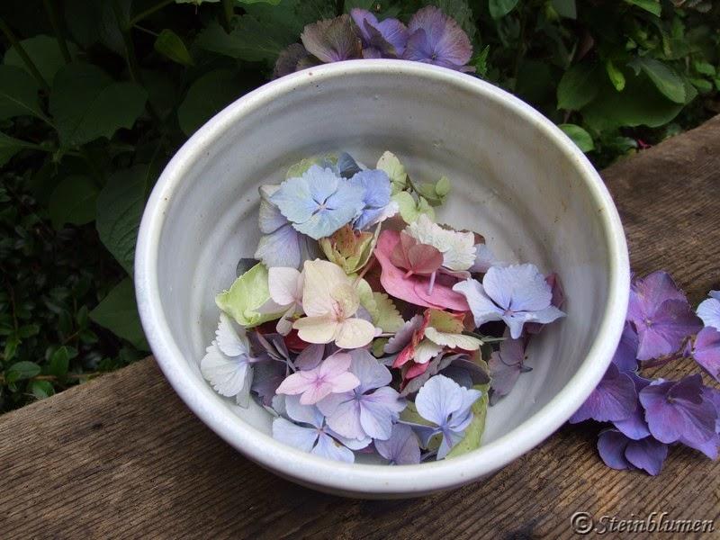 Hortensienblüten trocknen