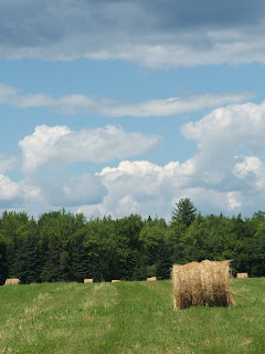 Baled Hay in the field