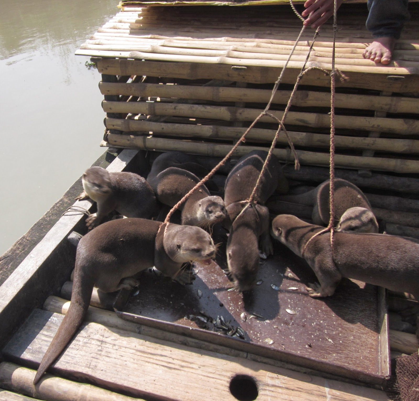 Village flute fishing with otters for Otter fish houses