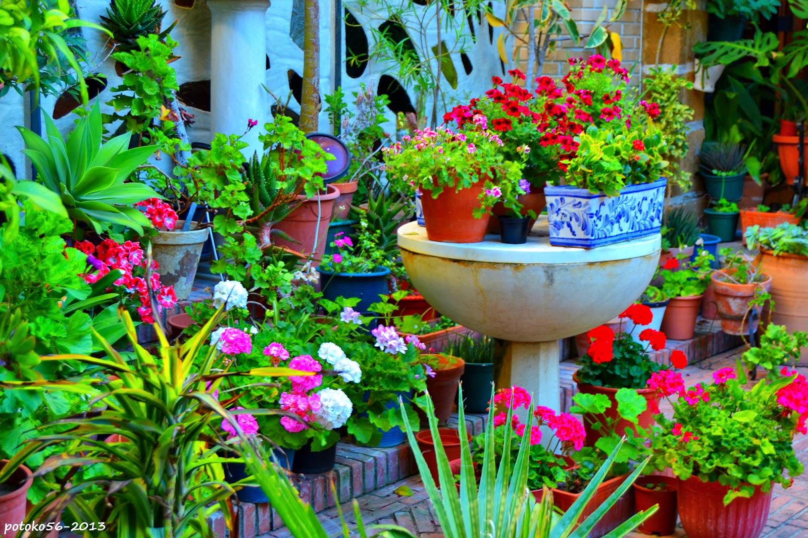 Flores en el Patio de la Parroquia del Carmen Rota