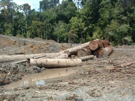 Lahan kritis Sulsel capai 682.784 hektar