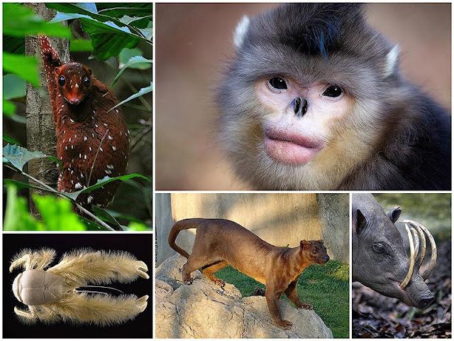 animales raros que desconocías que existieran