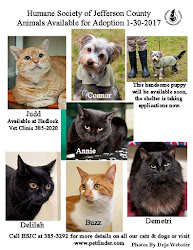 Animals Available for Adoption