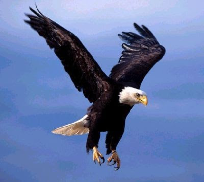 Eagle Bird's Image