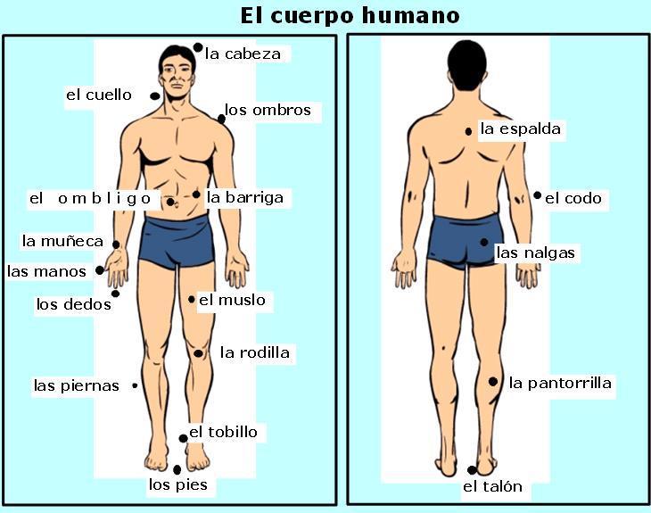 Benedito etp 2010 corpo humano em espanhol ii for Interior y exterior en ingles