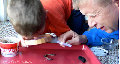 Boy and Dad observing Worm as part of a Worm Unit Study: STEMmom