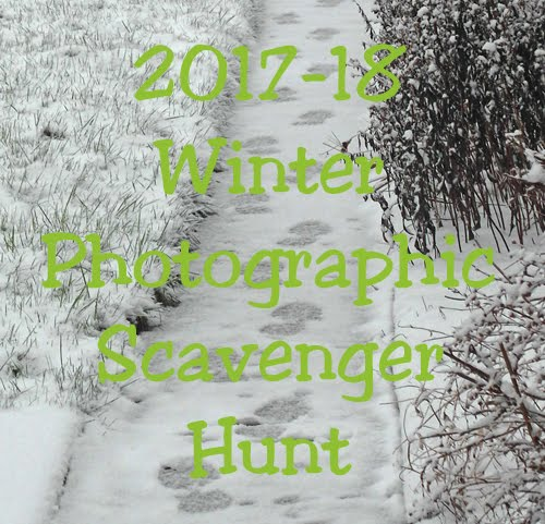 Winter Photographic Scavenger Hunt