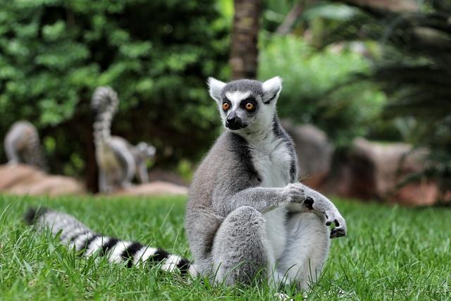Bioparc de Fuengirola, un nuevo concepto de Zoo de inmersión