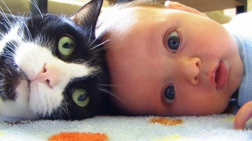 Gambar Lucu bayi Kencing dan Ada Kucing