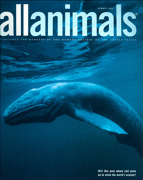 All Animals Whale Cover