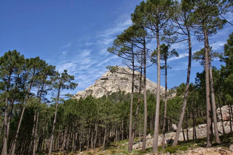 La montagne corse à Zonza