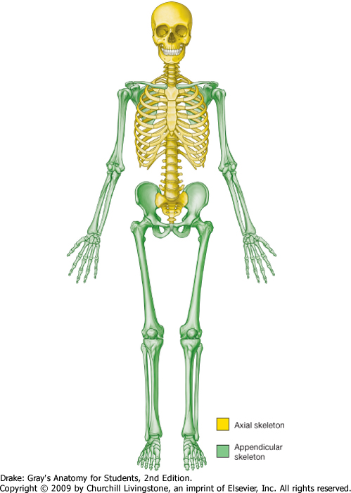 Body System Skeletal System