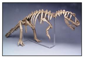 الهيكل العظمي للديناصورAllosaurus   من صنع روبرت لانغ . مصنوع من ورقه مربعه ذات بعد 16 إنش و حجمه 24 إنش . صور: روبرت لانغ.