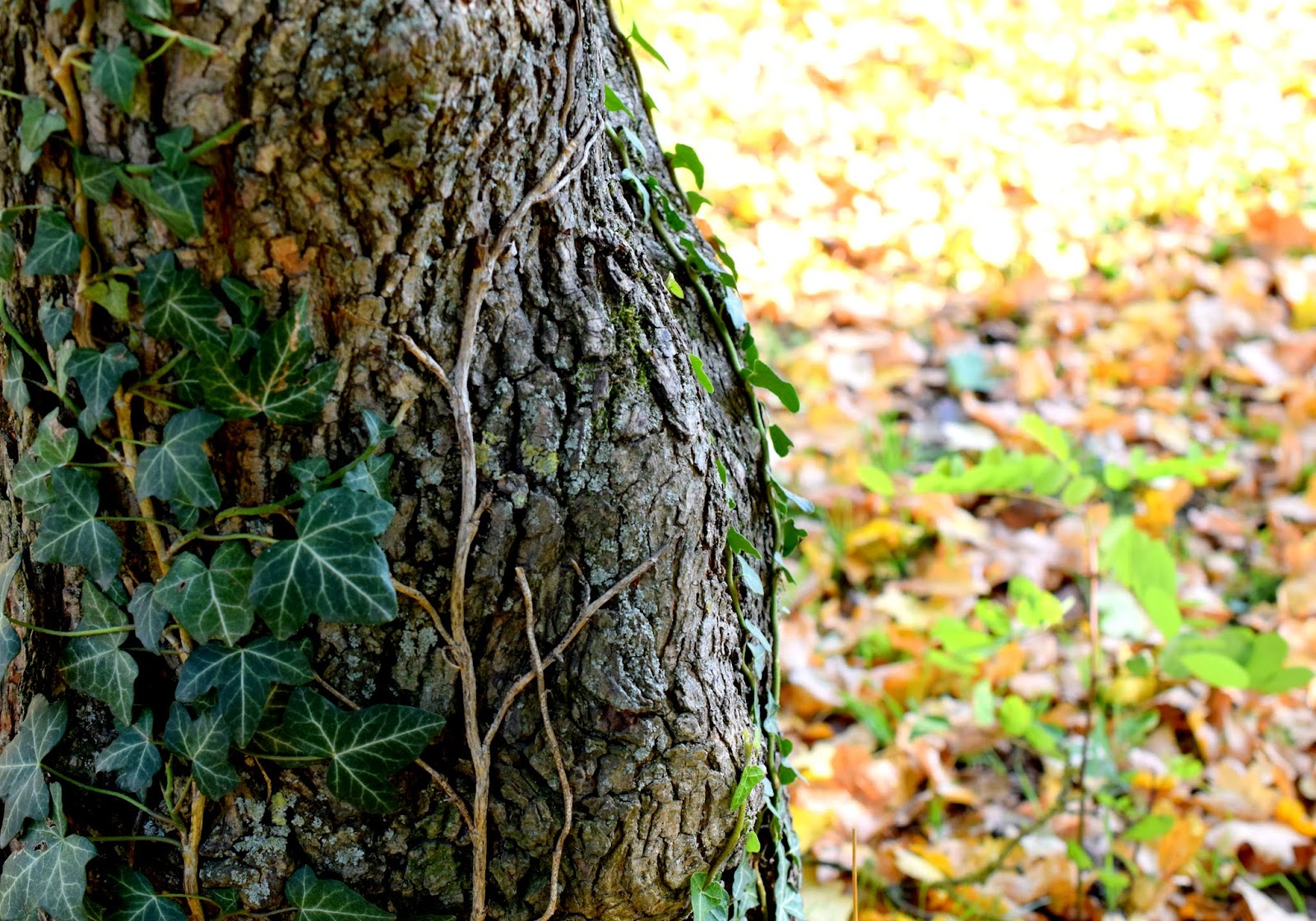 Herbst buntes Herbstlaub