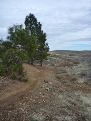 Poedunk Trail near its junction with Total Recall Trail